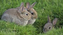 Развдение кроликов как бизнес