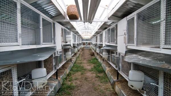 Кролиководство как бизнес: внутреннее устройство шеда