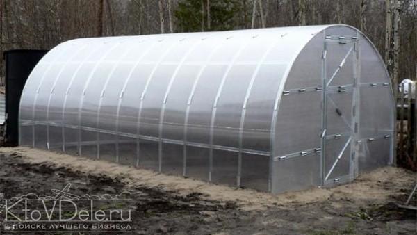 Бизнес по выращиванию зелени в теплице