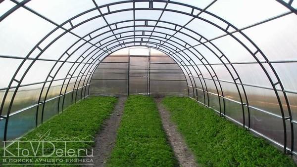 Бизнес на выращивании свежей зелени