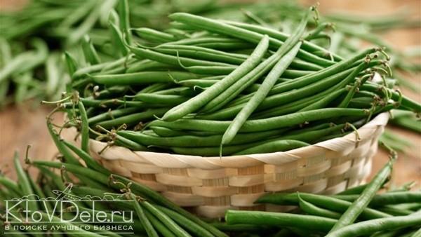 выращивание фасоли как бизнес