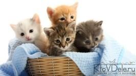 разведение кошек как бизнес