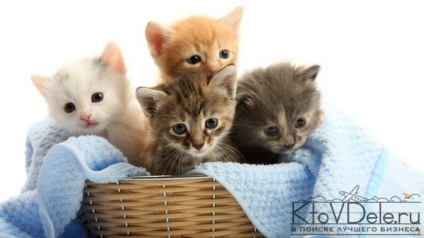 И с чего начать разведение кошек