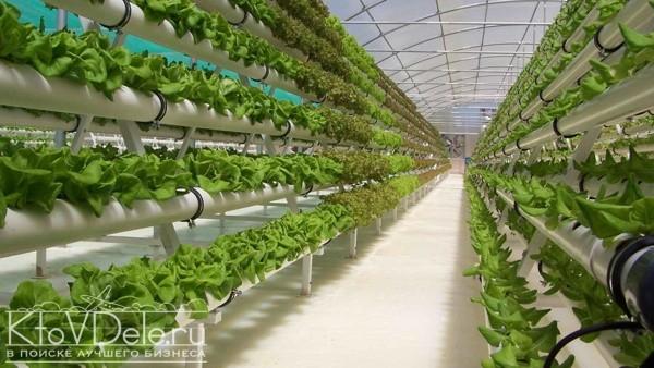 Тепличный бизнес на зелени