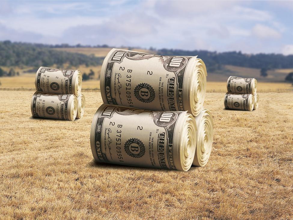 бизнес в сельском хозяйстве с нуля